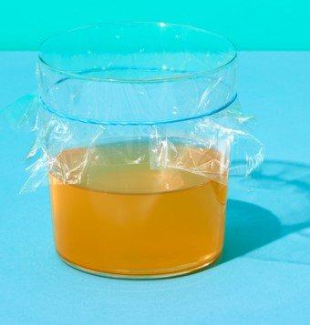 用苹果醋来制作果蝇陷阱